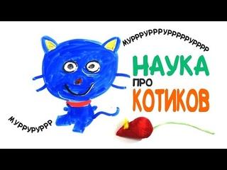 Научные факты о котиках [AsapSCIENCE]