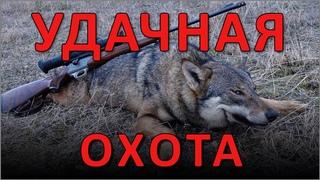 ОХОТА на волка. Автор стиха Александр Викторович Чацкий. Читает #ВЕГАН 💚 #ХРИСТОЛЮБ ✝️ ()