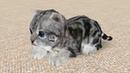 Кошка Симулятор 3 Пурумчик как Лев. Новые котята в семье котов Кида в Cat Simulator на пурумчата