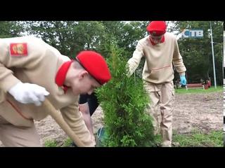 Высадка новых деревьев у школы искусств «Балтика» в память о погибших учителях Беслана