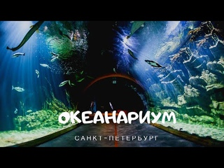 Океанариум СПб   январь 2020