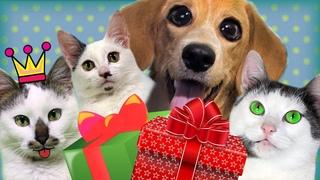 Письмо Деду Морозу и Подарки для Питомцев Лизы | Смешные Три Кота, котенок Мурка и Тафи