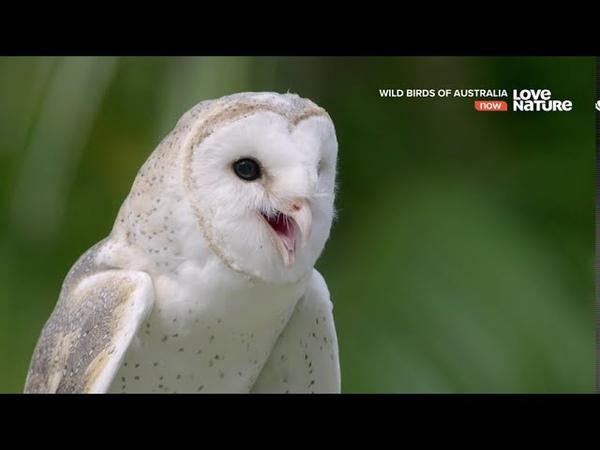 Дикие птицы Австралии Воздушные охотники Документальный фильм в Ultra HD 4K