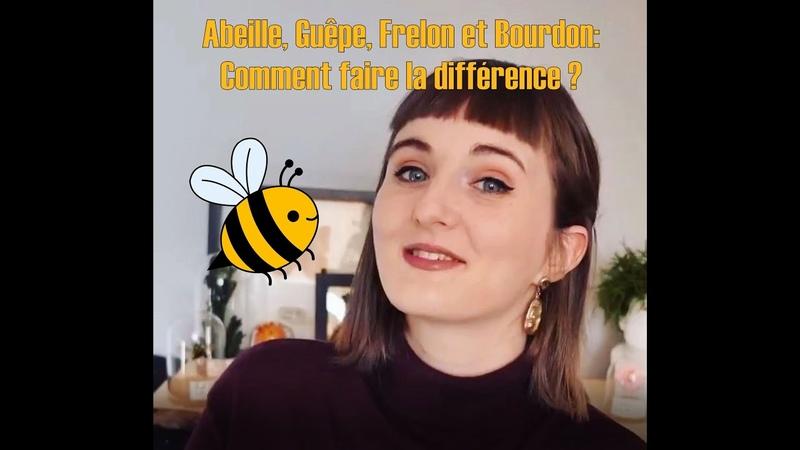 Bug Quickie Ep2 Abeilles Frelons Guêpes et Bourdon Comment faire la différence