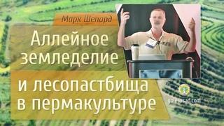 Аллейное земледелие и лесопастбища в пермакультуре! Марк Шепард