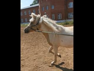 Лошади, ипподром, тренировки на лошадях   Ижевск kullanıcısından video