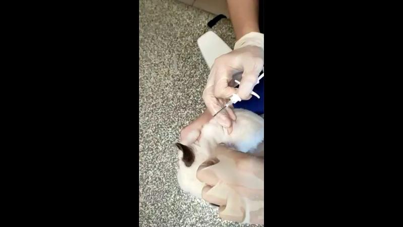 Видео от Государственная ветеринарная клиника СПб