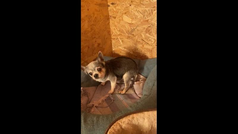 Видео от МиД Маленькие собачки ищут дом