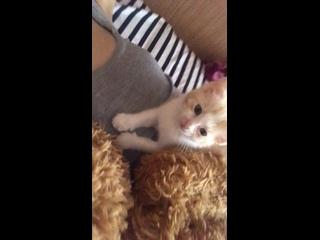 Видео от Виктории Воско