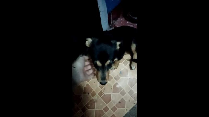 Видео от Помощь бездомным животным в с Лямбирь