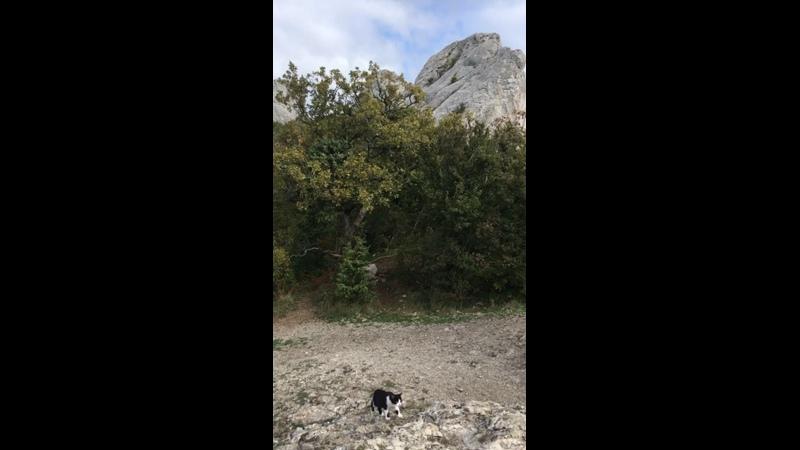 Видео от ¡Español con Clarita