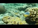 Подводный мир Мальдив, часть 1, РУСАЛКА