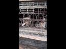 Видео от Права Животных в России