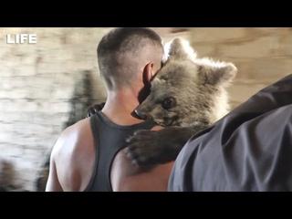 Медвежонка Машу отобрали у хозяина после прогулки по пляжу в Чебаркуле