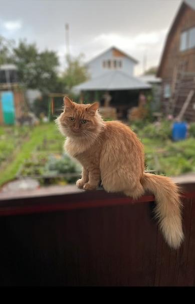 19 октября пропала кошка!В районе красного химика ...