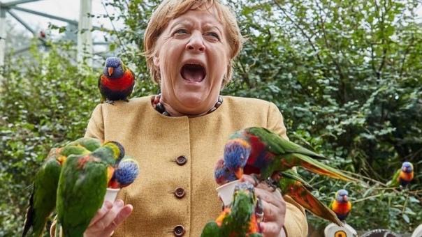 🦜 Птицы — точно не ядерный электорат канцлера Герм...