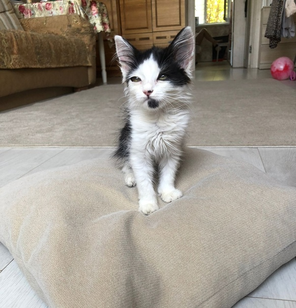 Срочно ищет хозяев маленький котеночек(девочка, 3 мес.) ,...