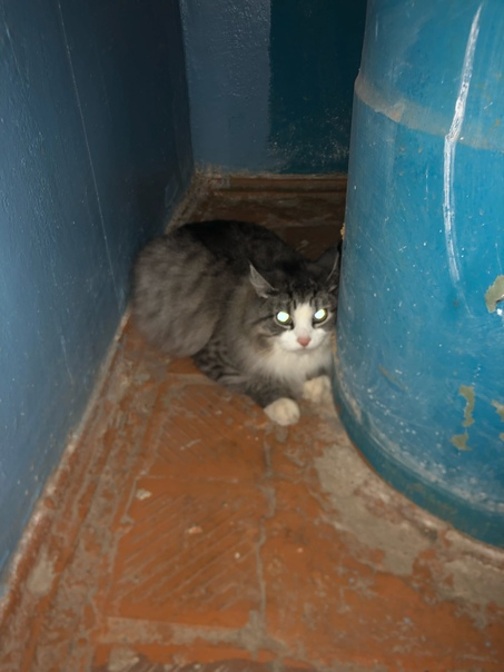 Сидит кошка или кот в 1 подъезде Шатенево 75. Може...