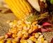 Прайс-лист на семена кукурузы производства РФ в яровой сезон 2021 года, image #2