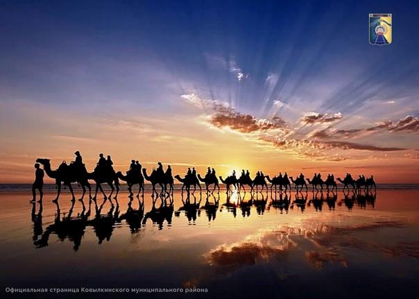 📍24 сентября - Международный день караванщика  Еже...
