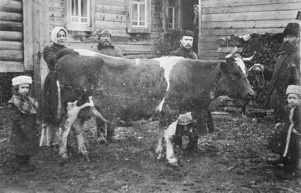 Старый Буинскъ. Продажа коровы. Корова была продан...