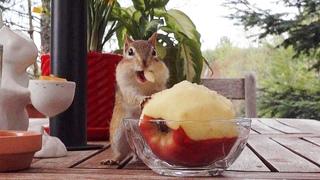 테이블 위에 사과를 두면 벌어지는 일들 What Will Happen With An Apple On The Table?
